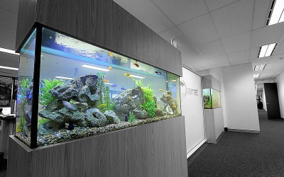 Corporate Office Custom Tank