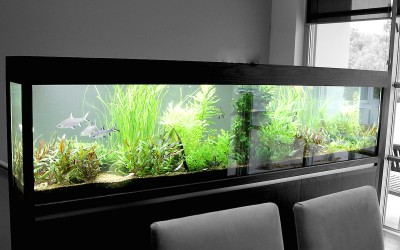 Large Feature Tank